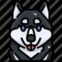 animal, avatar, dog, husky, pets, puppy, siberian icon