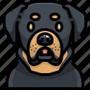 animal, animals, avatar, dog, pets, puppy, rottweiler icon