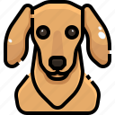animal, animals, avatar, dachshund, dog, pets, puppy icon