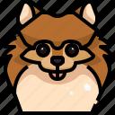 animal, animals, avatar, dog, pets, pomeranian, puppy icon