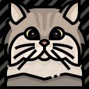 animal, avatar, cat, kitty, persian, pets