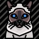 animal, avatar, cat, kitty, pets, siamese