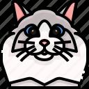animal, avatar, cat, kitty, pets, ragdoll