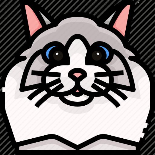 animal, avatar, cat, kitty, pets, ragdoll icon