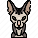 animal, avatar, cat, kitty, pets, sphinx icon