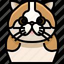 animal, avatar, cat, fold, kitty, pets, scottish