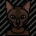 animal, avatar, burmese, cat, kitty, pets icon