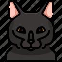 animal, avatar, bombay, cat, kitty, pets icon