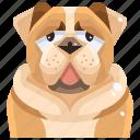 animal, avatar, bull, canine, dog, pets, puppy