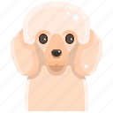 animal, avatar, canine, dog, pets, pudle, puppy icon