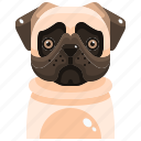 animal, avatar, canine, dog, pets, pug, puppy