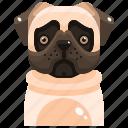animal, avatar, canine, dog, pets, pug, puppy icon