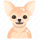 animal, avatar, canine, chihuahua, dog, pets, puppy icon