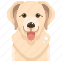 dog, pets, golden, puppy, retriever, canine, avatar icon