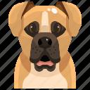 animal, avatar, boxer, canine, dog, pets, puppy icon