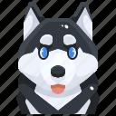 avatar, canine, dog, husky, pets, puppy, siberian