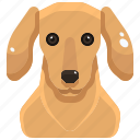 animal, avatar, canine, dachshund, dog, pets, puppy