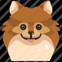 animals, avatar, canine, dog, pets, pomeranian, puppy icon