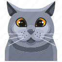 shorthair, pets, cat, british, animal, kitty, avatar icon