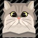 animal, avatar, cat, kitty, persian, pets icon
