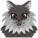 animal, avatar, cat, coon, kitty, maine, pets