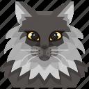 animal, avatar, cat, coon, kitty, maine, pets icon