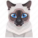 siamese, cat, animal, pets, kitty, avatar icon