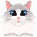 pets, cat, ragdoll, animal, kitty, avatar icon