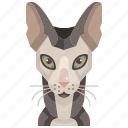pets, cat, animal, sphinx, kitty, avatar icon