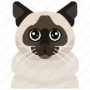 animal, avatar, birman, cat, kitty, pets