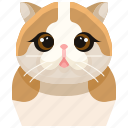scottish, pets, cat, animal, kitty, fold, avatar icon