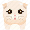 animal, avatar, cat, fold, kitty, pets, scottish
