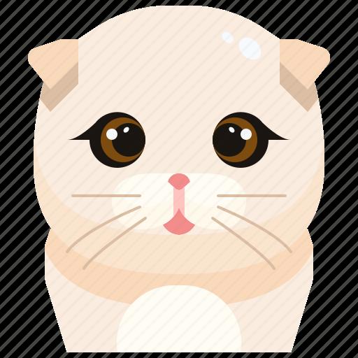 animal, avatar, cat, fold, kitty, pets, scottish icon