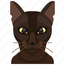 pets, burmese, cat, animal, kitty, avatar icon