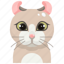 curl, pets, american, cat, animal, kitty, avatar icon