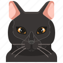 pets, cat, animal, bombay, kitty, avatar icon