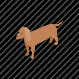 animal, blog, canine, dachshund, dog, isometric, pet icon