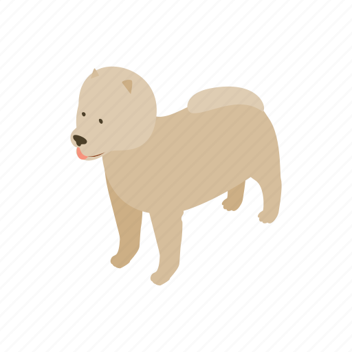 animal, blog, canine, dog, isometric, pet, pomeranian icon