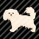 dog, beast, mammal, spitz, lap dog, pet icon