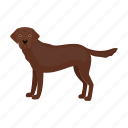 mammal, beast, labrador, dog, pet icon