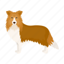dog, beast, collie, colly, mammal, pet icon