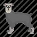 mammal, beast, dog, pet, giant schnauzer icon