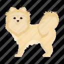 mammal, spitz, beast, dog, pet icon