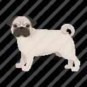 dog, beast, pug, mammal, pet icon