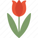 easter, flower, holidays, tulip icon