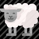 animal, nature, sheep, zoo