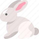 animal, bunny, rabbit, zoo