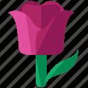 easter, floral, flower, plant, tulip