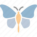 butterfly, ecology, insect, summerbird icon