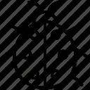 animal, bug, error, insect icon